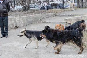 Кто занимается бездомными собаками