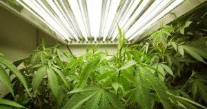 Какое наказание за выращивание травы дома