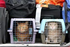 Перевозка собак в самолете по россии аэрофлот