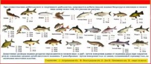 Размеры вылавливаемой рыбы в ростовской области