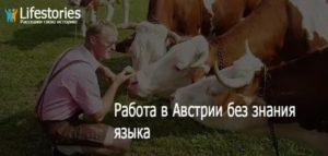Работа в австрии для русских вакансии 2019 без знания языка