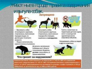 Выгул собак законы